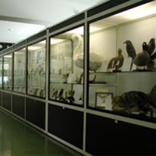 Museum of Natural History of Alpago