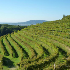 Discovering Vicenza's foothills »